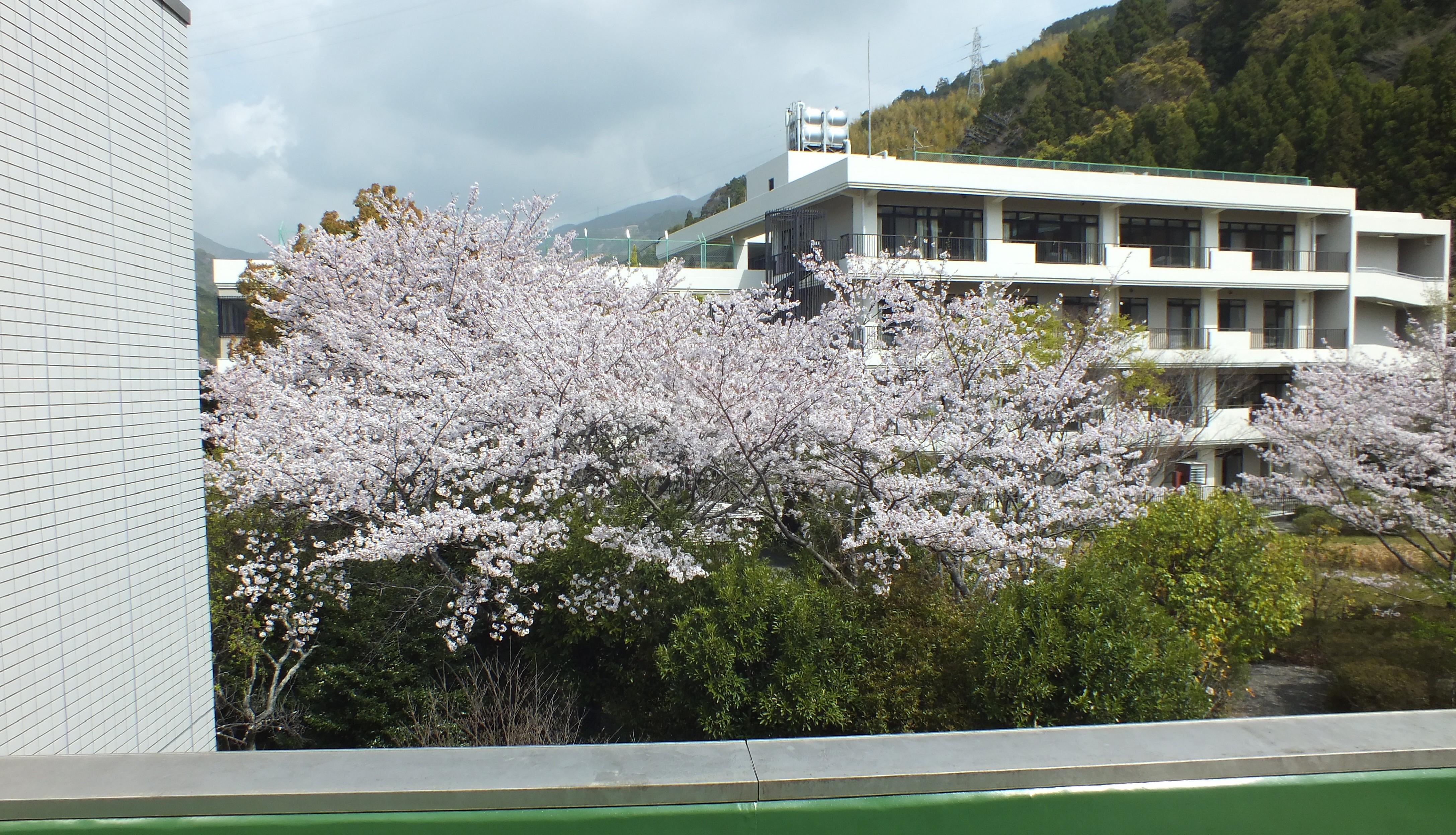 "<span class=""new-mark"">New</span><span class=""title"">中庭の桜が満開になりました。</span>"